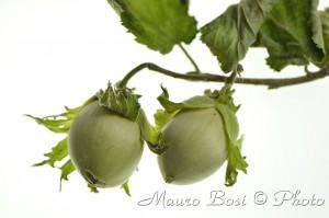 Frutti nocciole verdi scontornate