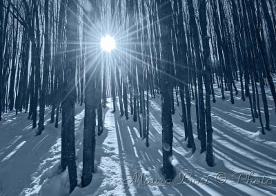 Alberi con la neve in Campigna