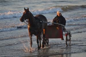 Cavallo in riva al mare